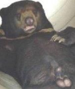 管道里面的正面黑猩猩