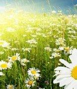 在阳光明媚的春天里收拾一篮的春光
