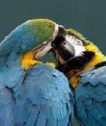 动物们的感情是一生有你