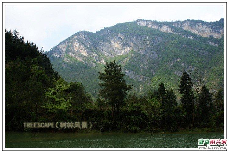 树林风景图片1
