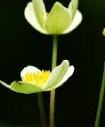 精灵一般的花朵盛开在春天