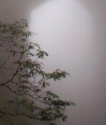 迷雾风景图片中的几分神韵