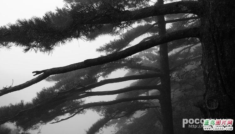 雨中黄山1