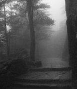 雨中黄山迷蒙近景风景图片