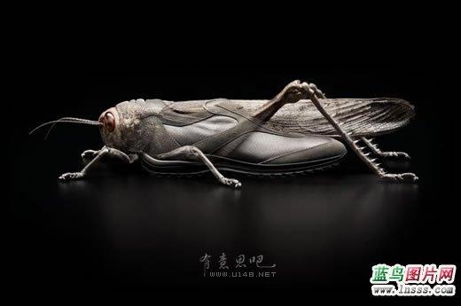 不只是昆虫1