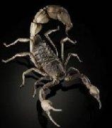 你能发现昆虫里的玄机吗