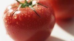 植物壁纸:鲜红的西红柿