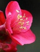 非常好看的春天花卉景观树