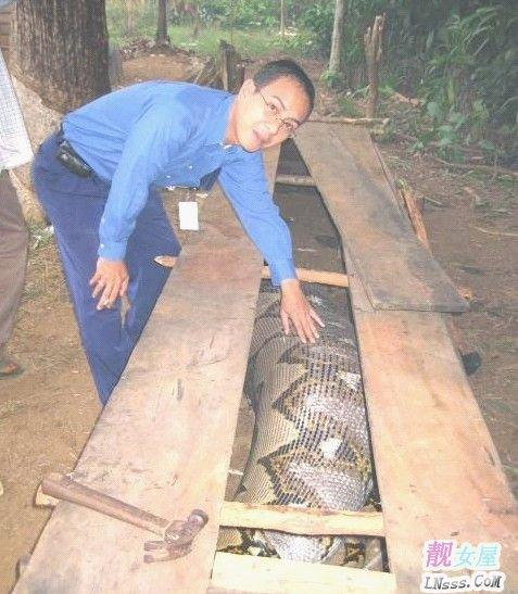 世界上最长的蛇