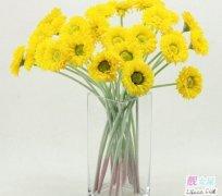 室内花卉图片大全