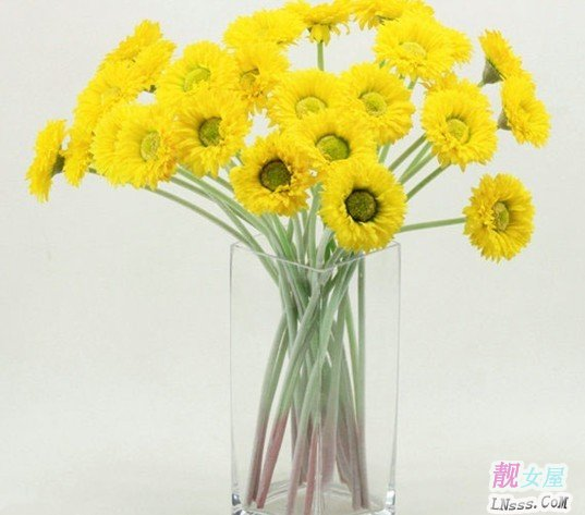 室内花卉图片大全1
