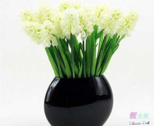 室内花卉图片大全2
