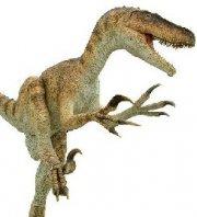 恐龙图片大全 恐龙的图片